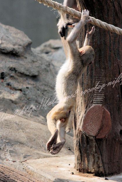 Monkey2013041114