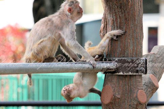 Monkeys20130411