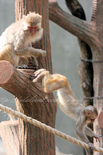 Monkeys201304111