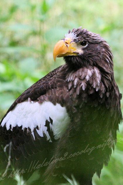 Eagle201305271