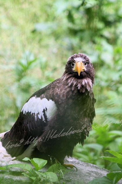 Eagle201305272