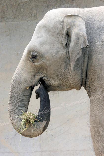 Elephant20130527