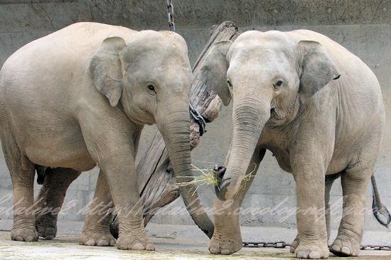 Elephants20130527