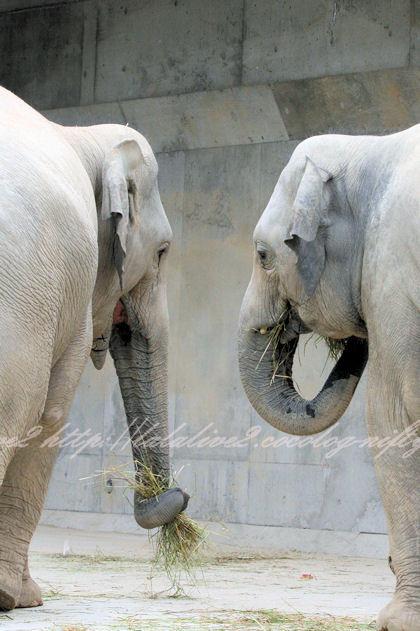 Elephants201305271