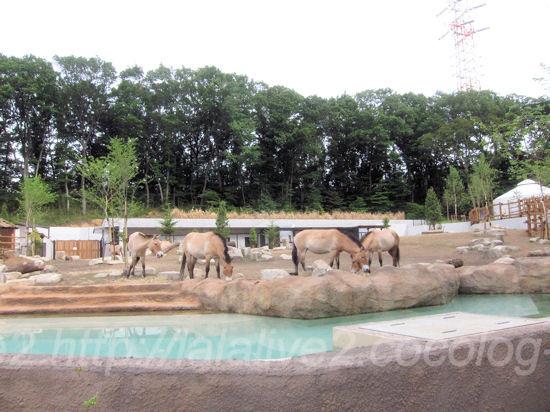 Asian_wild_horse201305272