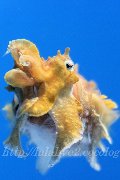 Squid201307111