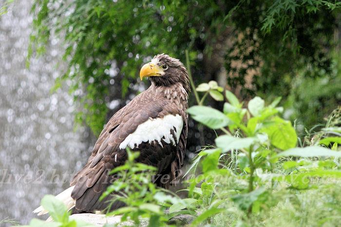 Eagle201305273