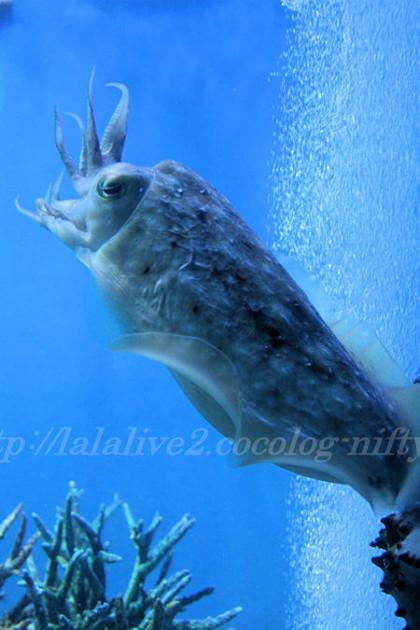 Squid201307115