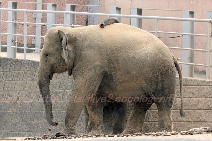 Elephants20130822