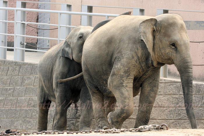 Elephants201308221