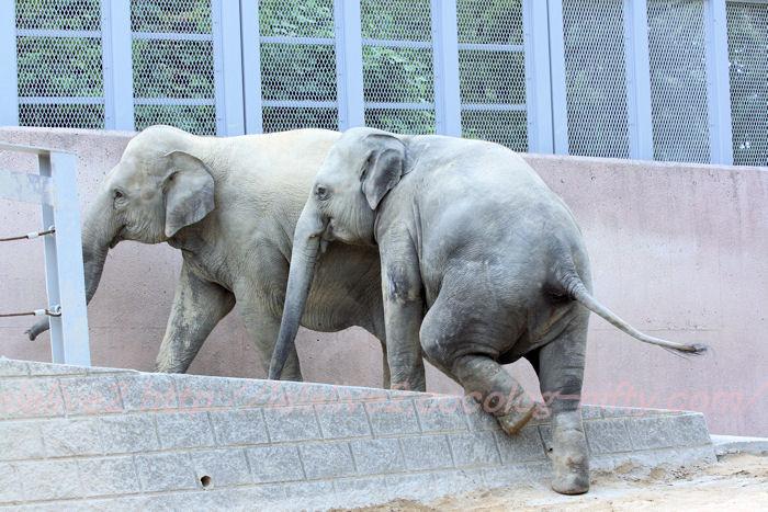 Elephants201308225