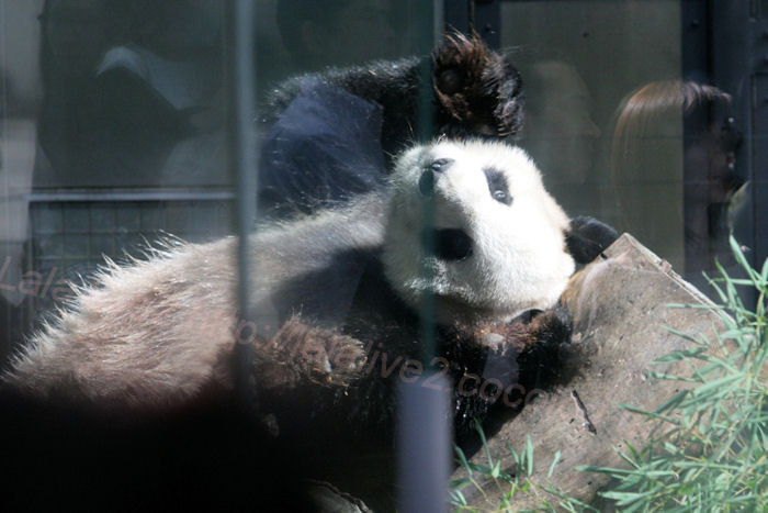Panda201310081_2