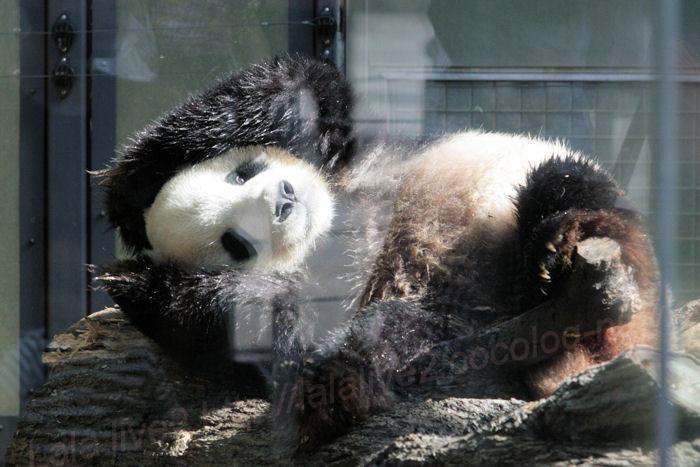 Panda201310082