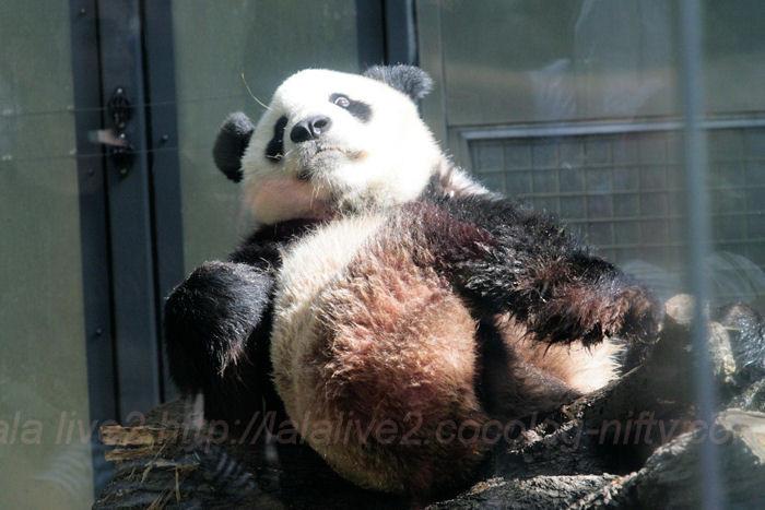 Panda201310084