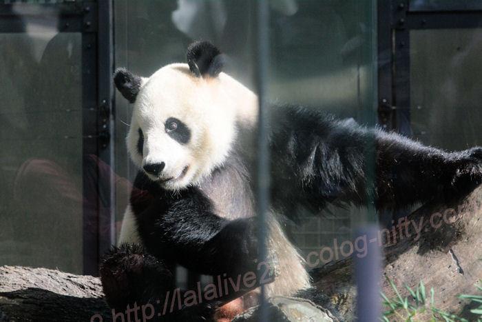 Panda201310085
