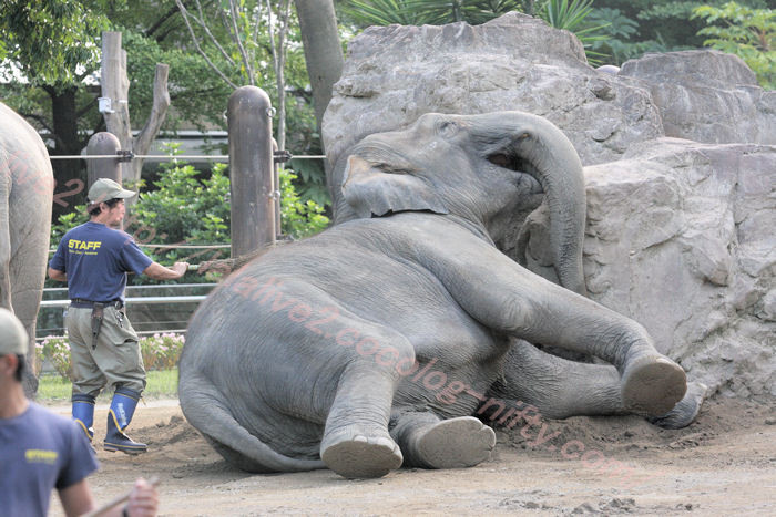 Elephant201310082
