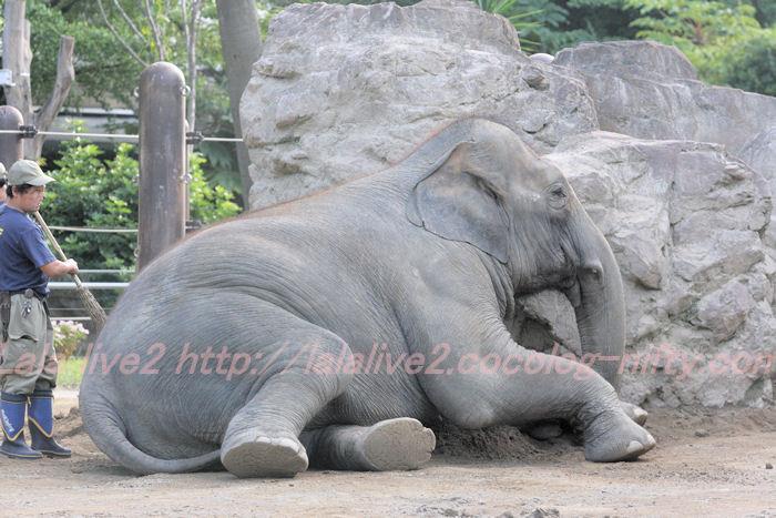 Elephant201310083