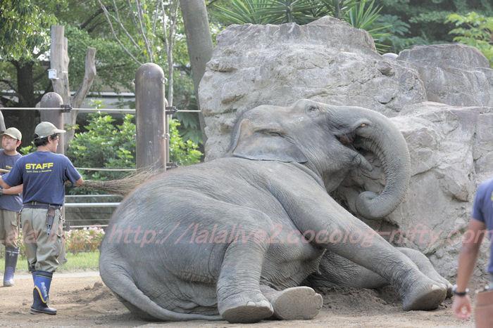 Elephant201310084