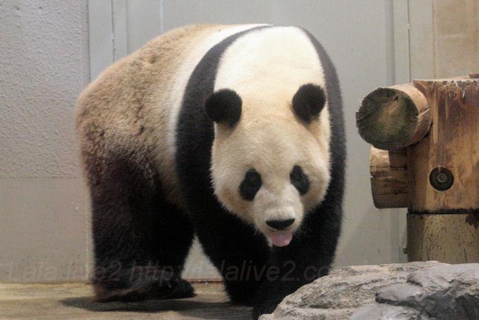 Panda201310087