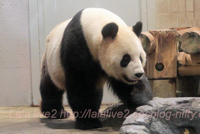 Panda201310088
