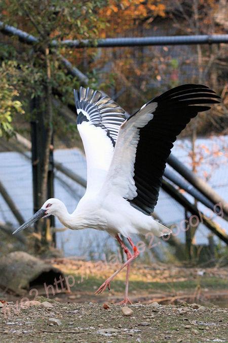 Stork20131129