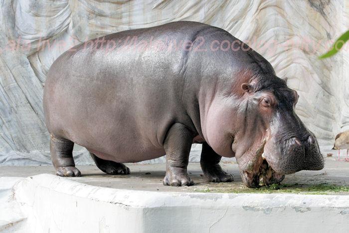 Hippojiro201310081