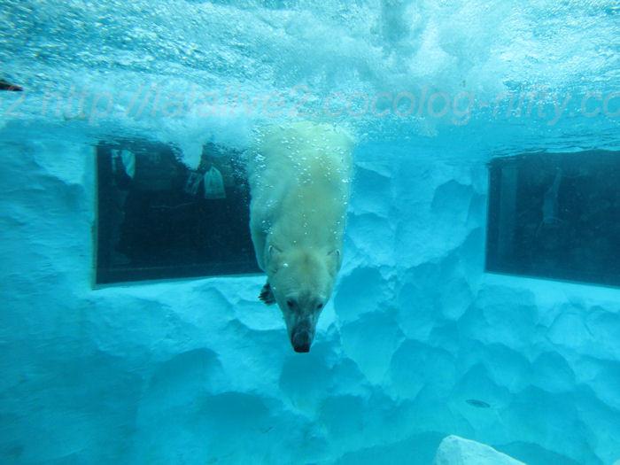 Polar20140206