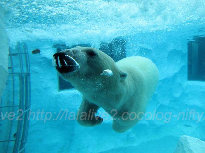 Polar201402061