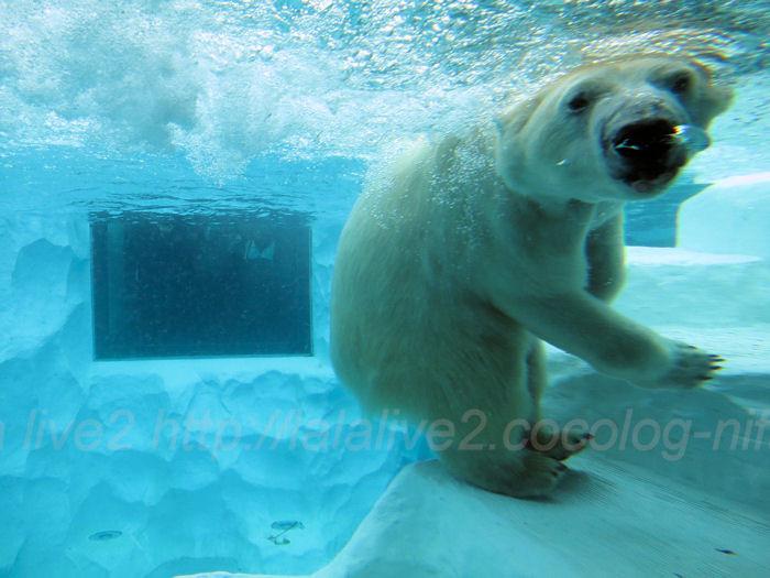 Polar201402062_2
