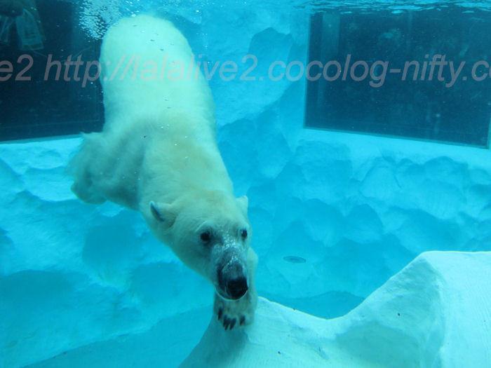 Polar201402063