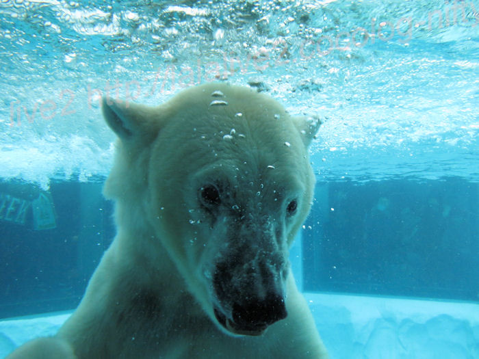 Polar201402064