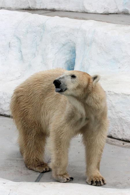 Polar201402068