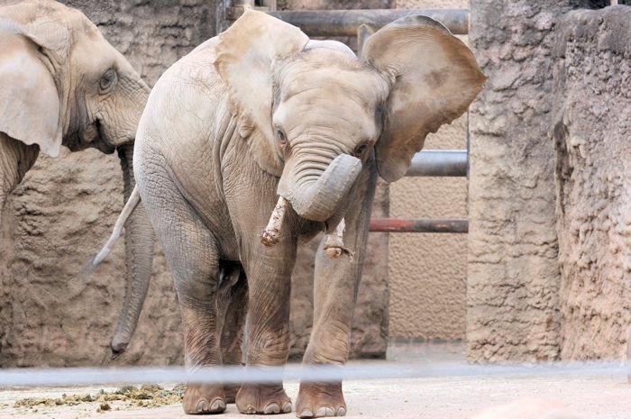 Elephant201402031