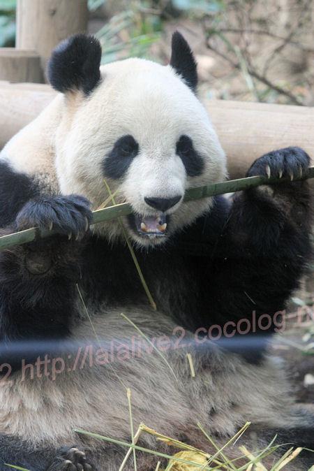 Pandasinsin2