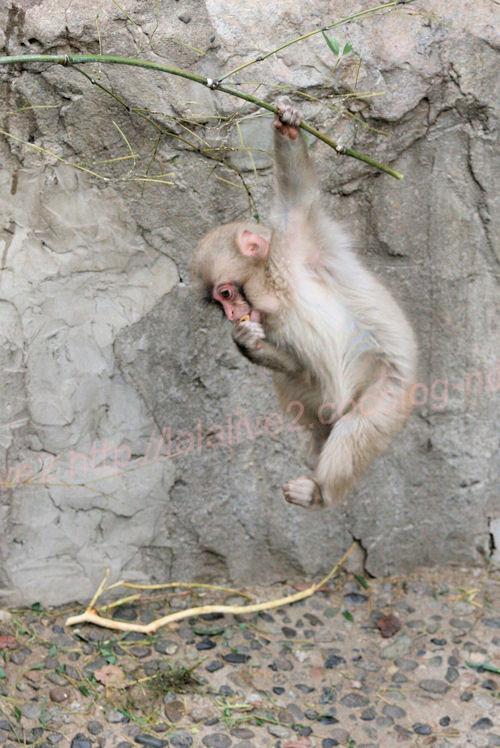 Monkey20140206