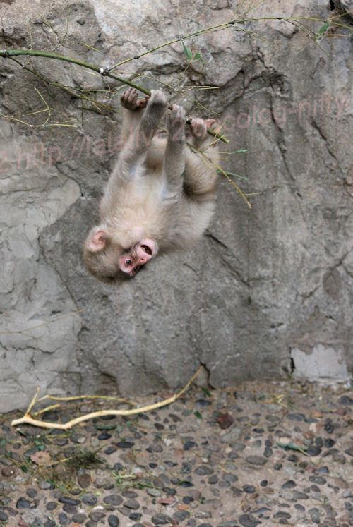 Monkey201402061