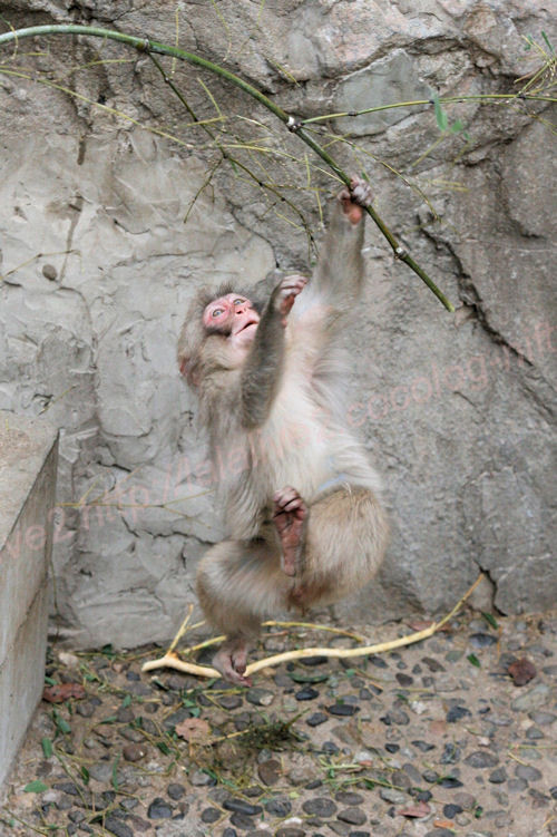 Monkey201402062