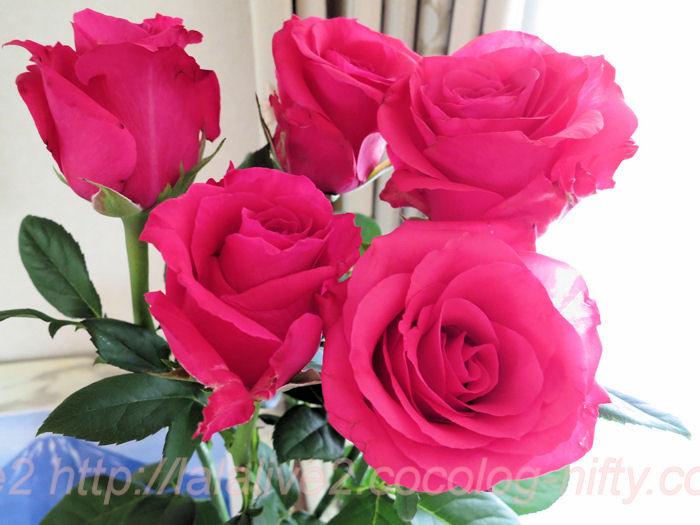 Roses20140513