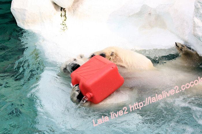 Polarbear201405231