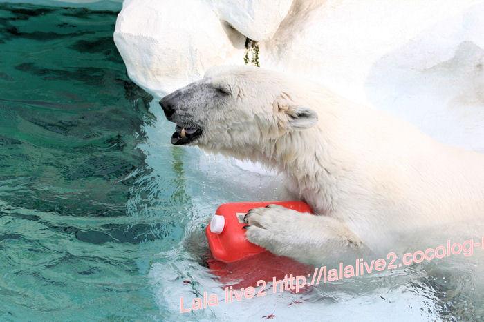 Polarbear201405232
