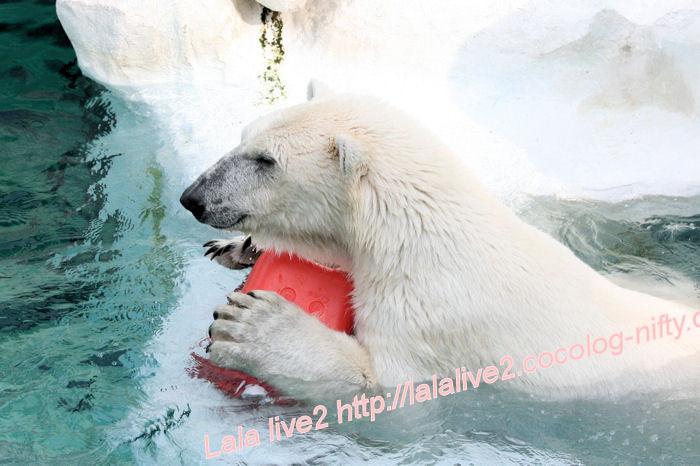 Polarbear201405233