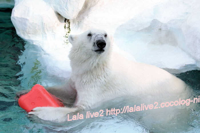 Polarbear201405235