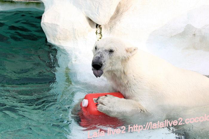 Polarbear201405236