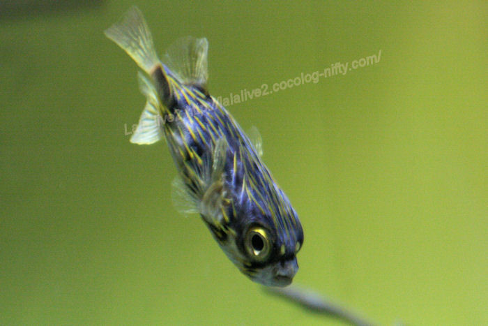 Southern_grove_fish20140731