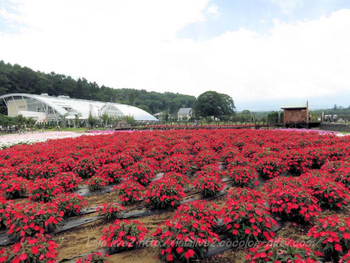 Hananomiyako201409104