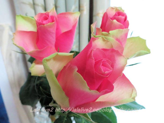 Roses201410