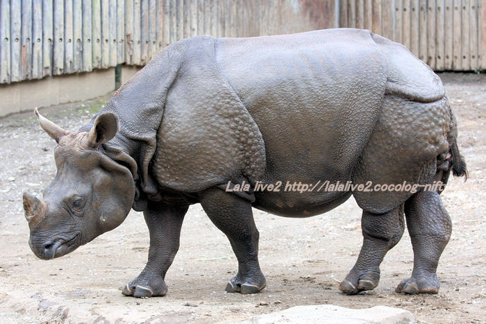 Rhino20141007