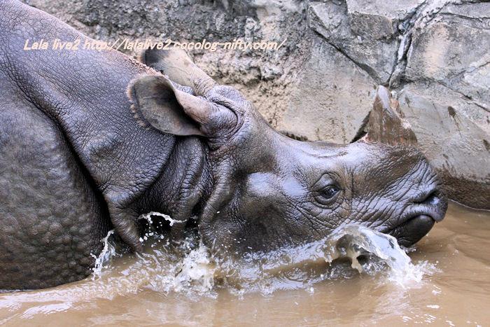 Rhino201410071