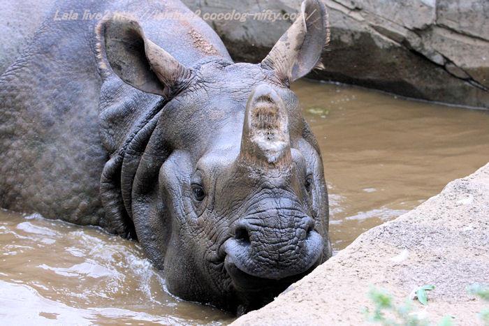 Rhino201410072