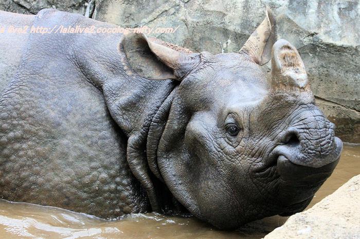 Rhino201410073_2